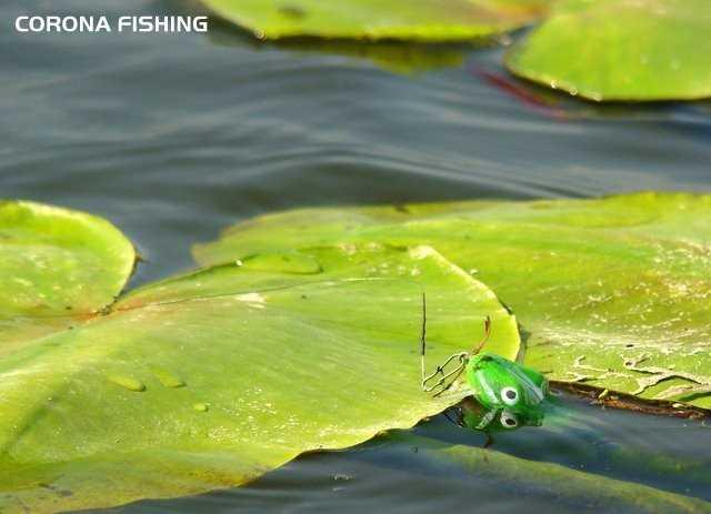 przynęta żaba
