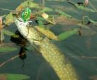 Łowienie powierzchniowe