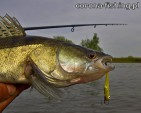 Łowienie nieaktywnych ryb.