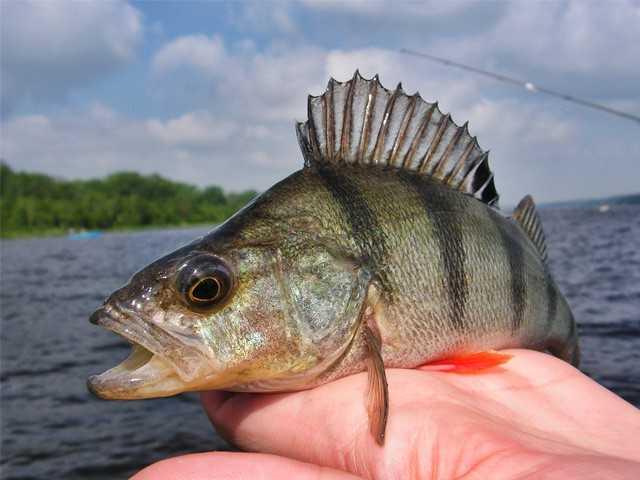 jak zrobić fotkę na rybach