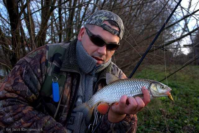 Co łowić w styczniu? KLEŃ