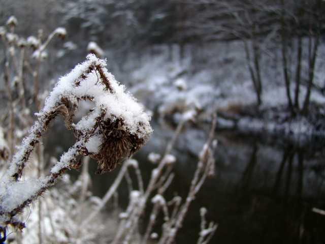 Pstrąg. Zimowe krajobrazy przeplatane czerwonymi kropkami.