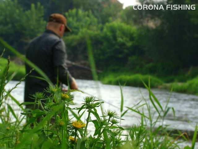 rzeka kleń na spinning