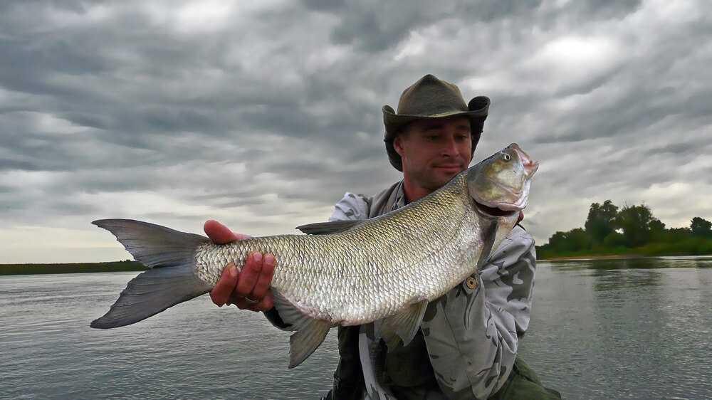 łowienie w czasie powodzi, wysoka woda, powódź, ryby