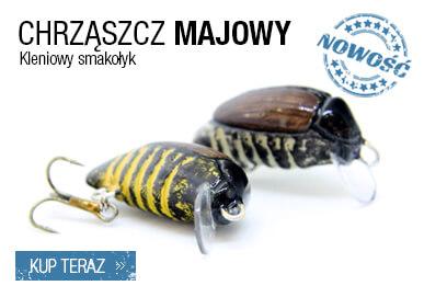 chrząszcz majowy